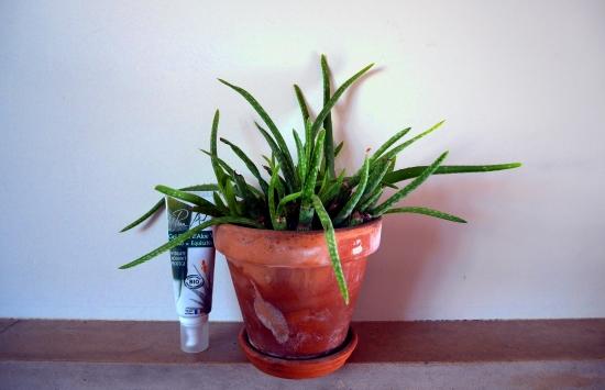 Plant d'aloe vera et tube d'aloe vera Pure Aloe