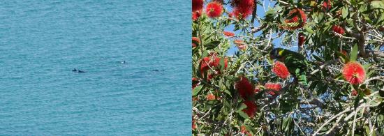 Dauphins et perroquet, Cap Byron, Australie