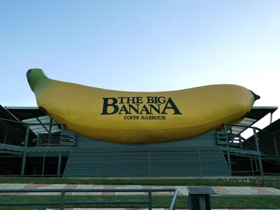 Banane géante, Coffs Harbour, Australie