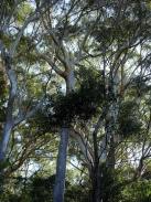 Sea Acres Rainforest, Australie
