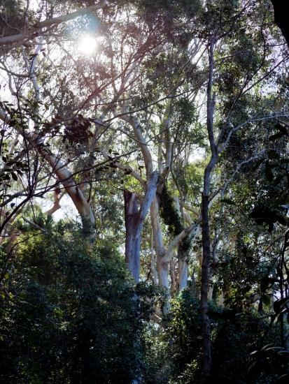 Rainforest, Australie